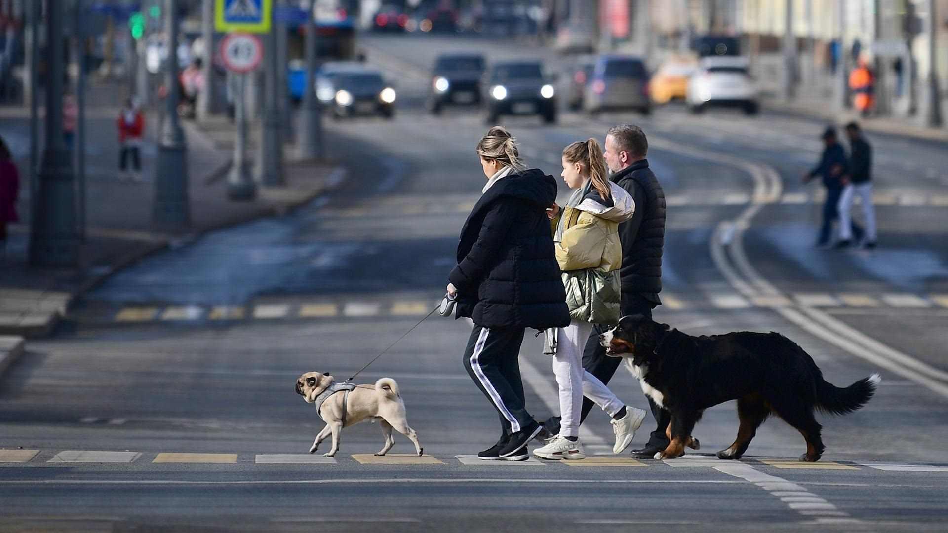 Прикольные картинки собак на прогулке 16
