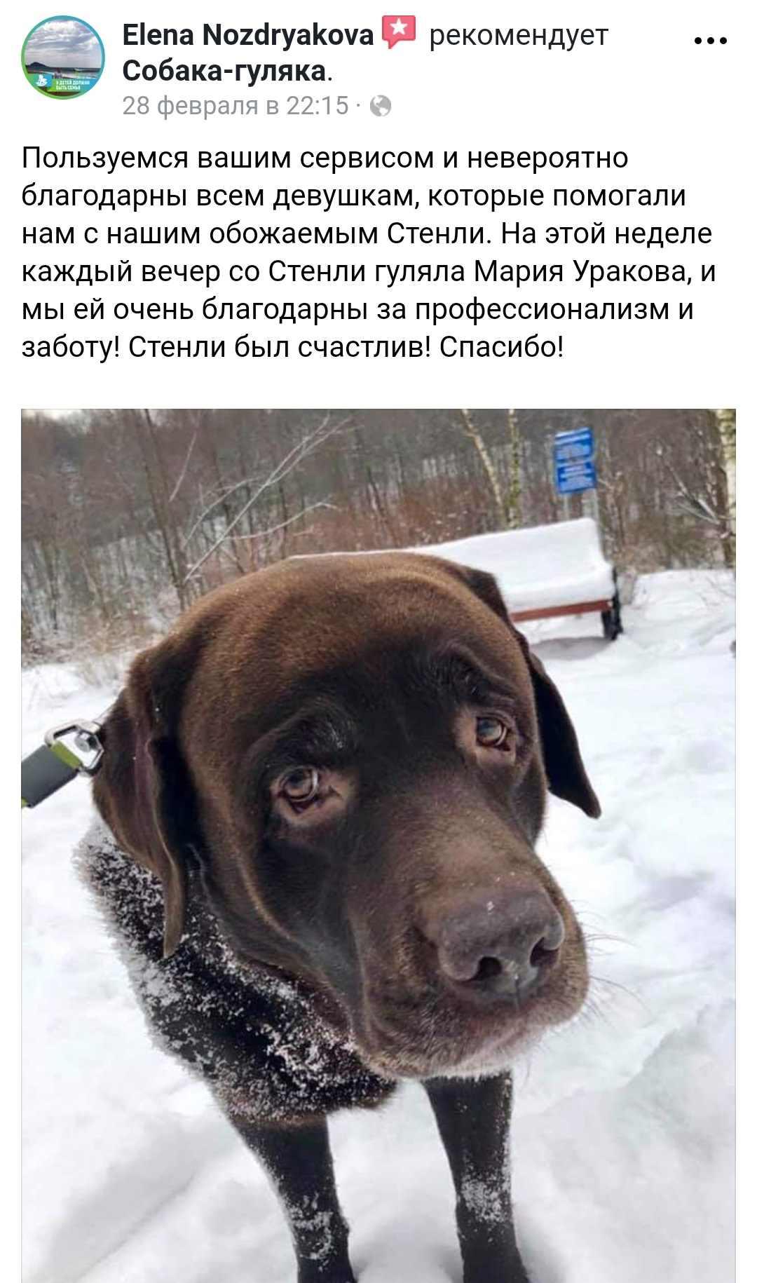 Прикольные картинки собак на прогулке 18
