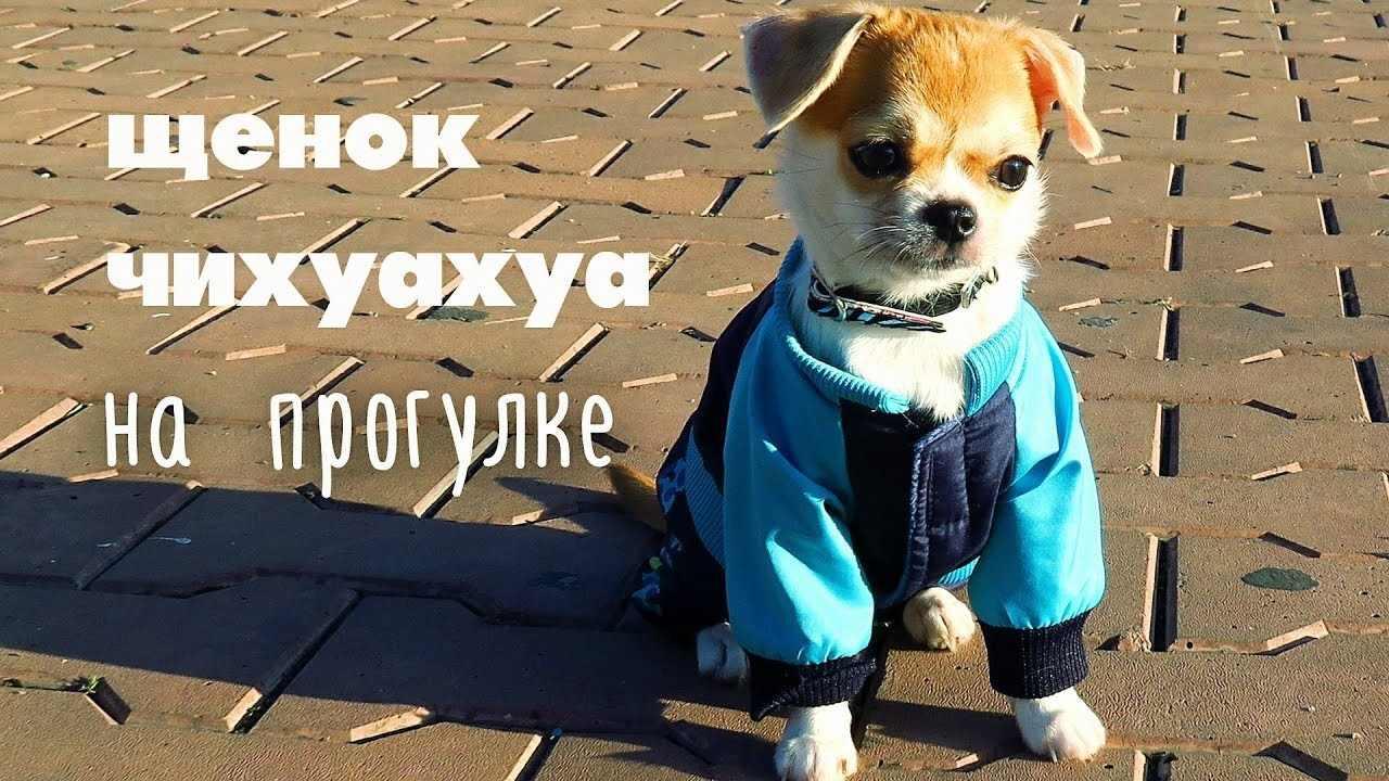 Прикольные картинки собак на прогулке 19