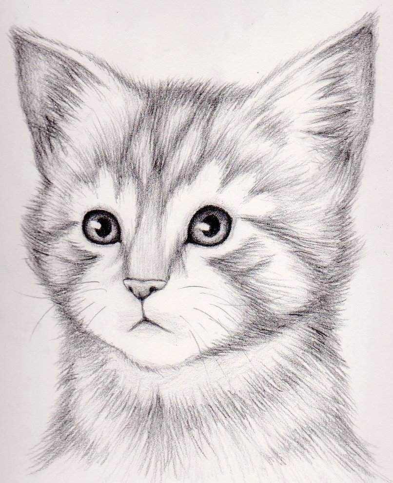 Рисунки карандашом животные из мультиков 15