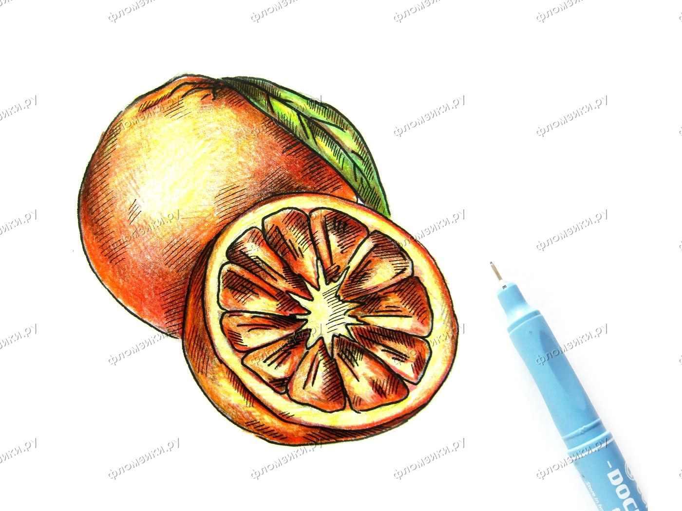 Рисунок Половинка апельсина для срисовки 01