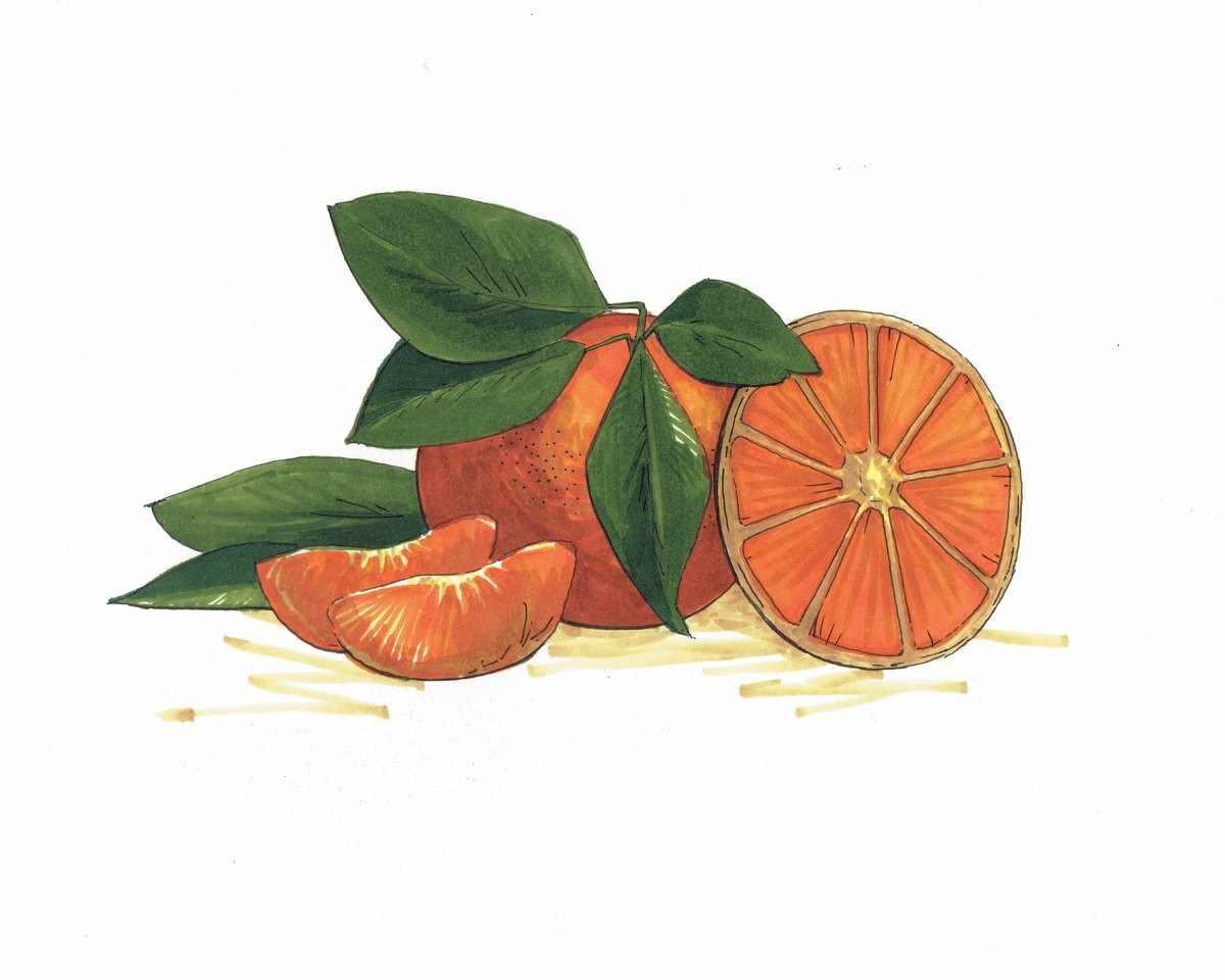 Рисунок Половинка апельсина для срисовки 06