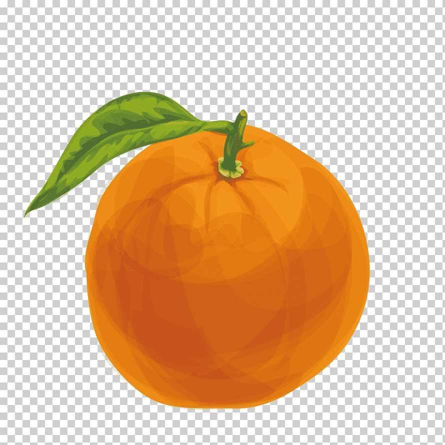 Рисунок Половинка апельсина для срисовки 10