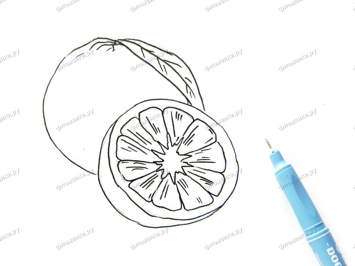 Рисунок Половинка апельсина для срисовки 15