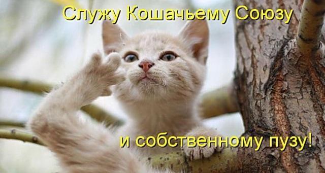 Животные картинки с надписями забавные и классные (1)