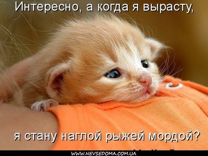 Животные картинки с надписями забавные и классные (10)