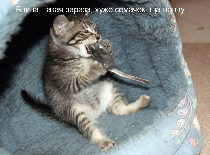 Животные картинки с надписями забавные и классные (11)