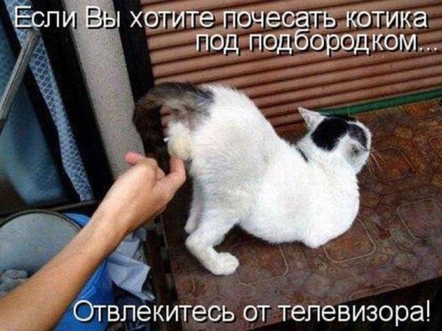 Животные картинки с надписями забавные и классные (12)