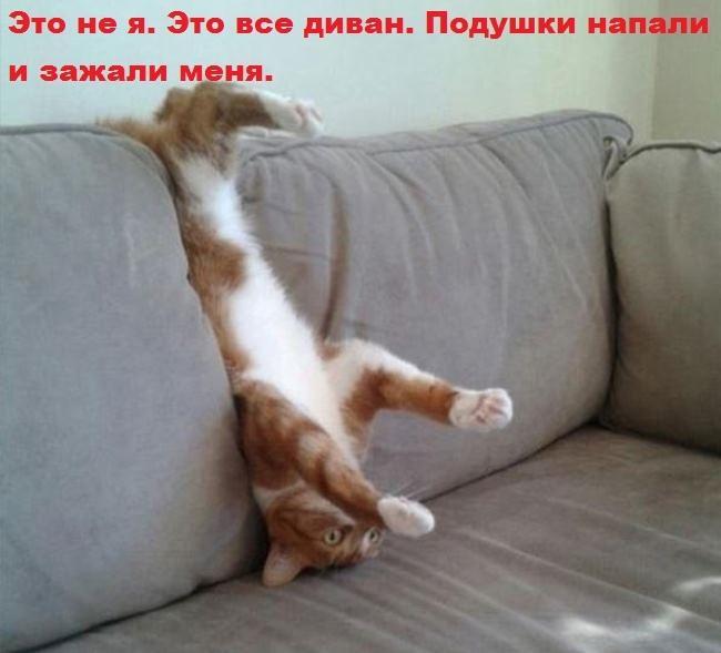Животные картинки с надписями забавные и классные (2)