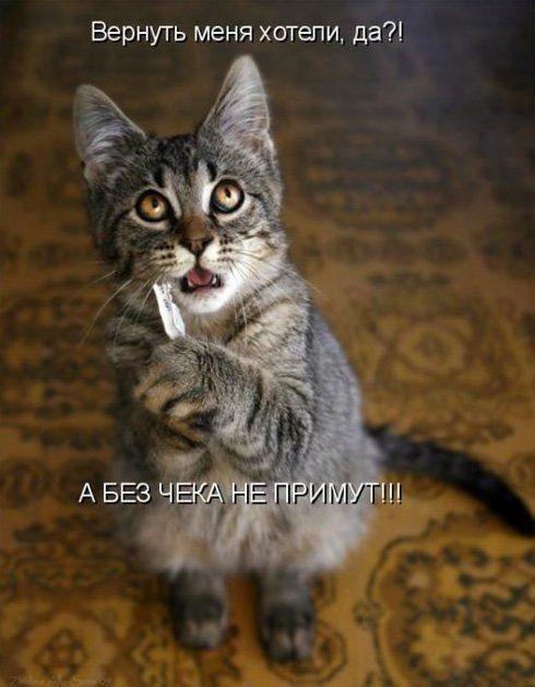 Животные картинки с надписями забавные и классные (25)