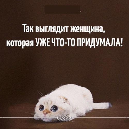 Животные картинки с надписями забавные и классные (3)