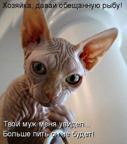 Животные картинки с надписями забавные и классные (4)