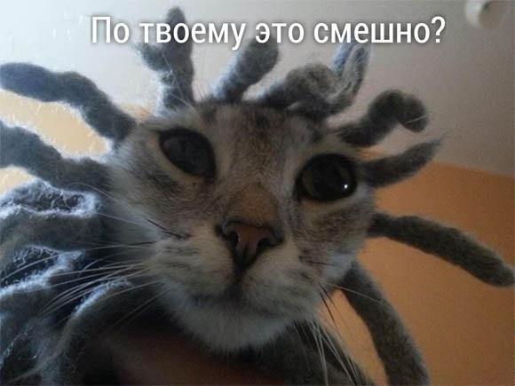 Животные картинки с надписями забавные и классные (5)