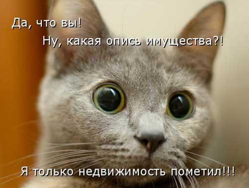 Животные картинки с надписями забавные и классные (6)