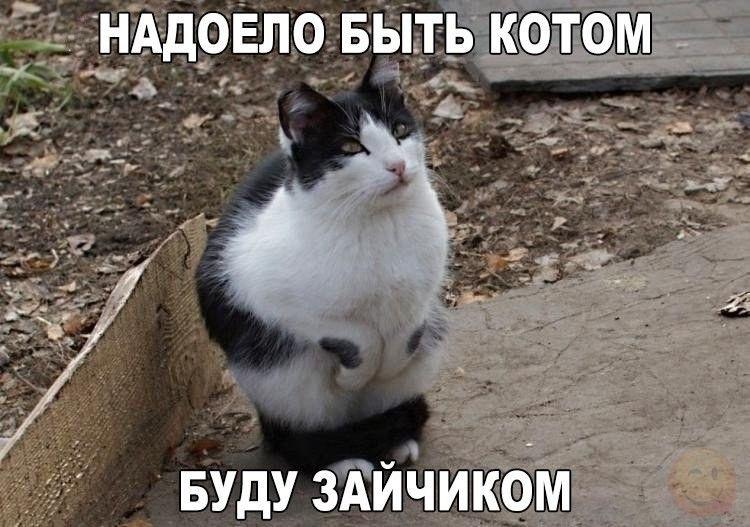 Животные картинки с надписями забавные и классные (7)
