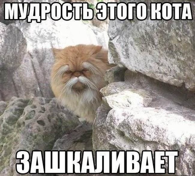Животные картинки с надписями забавные и классные (8)
