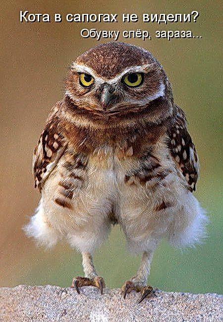 Животные картинки с надписями забавные и классные (9)