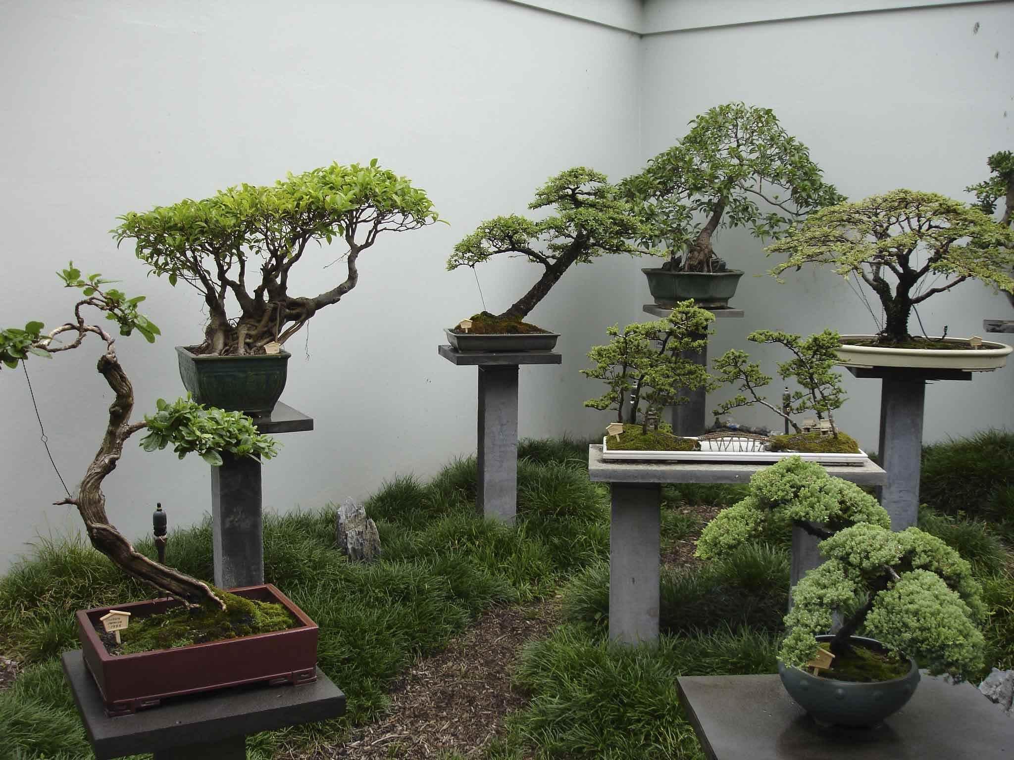 Картинки домашние деревья в горшках, фото 04