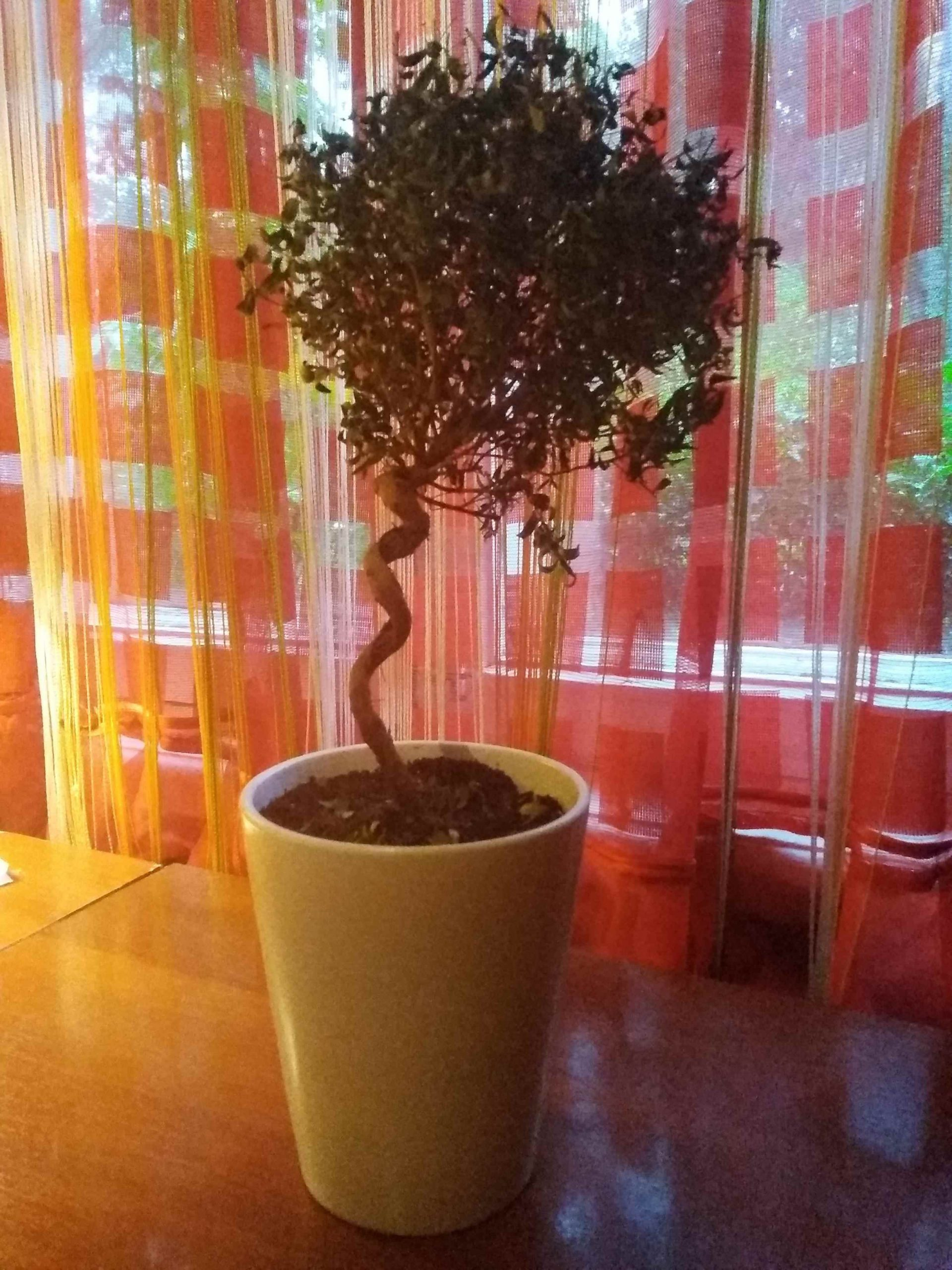 Картинки домашние деревья в горшках, фото 14