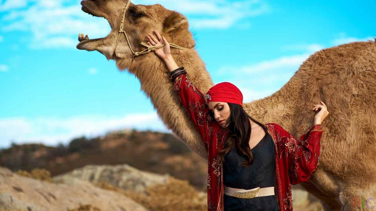 Красивый верблюд фото животного 12