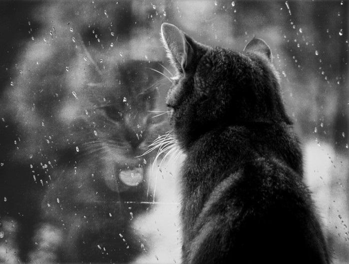 Лучшие фото черно белое грусть (20)