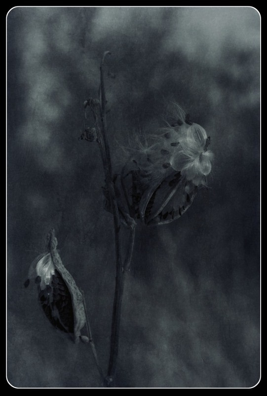 Лучшие фото черно белое грусть (24)