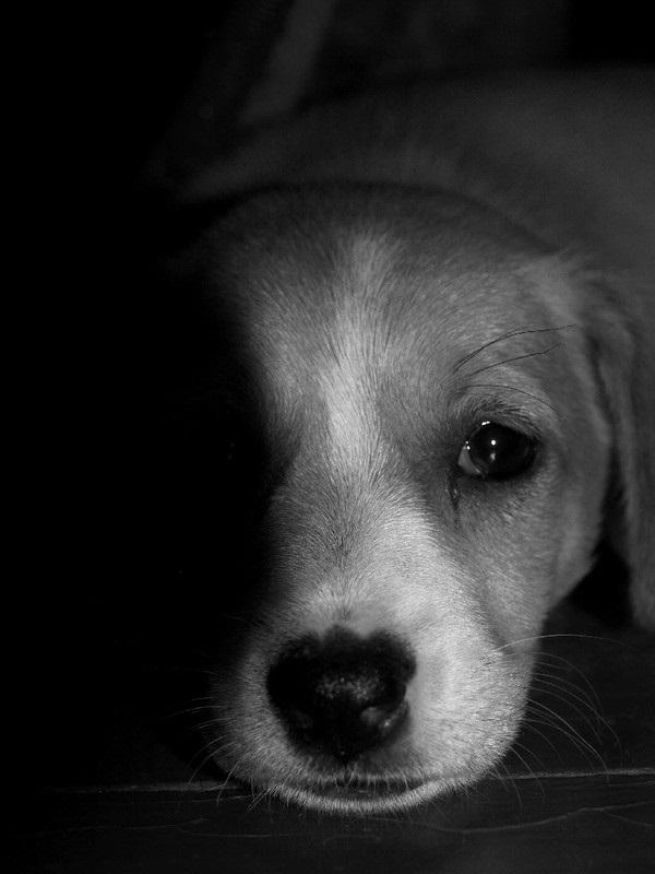 Лучшие фото черно белое грусть (25)