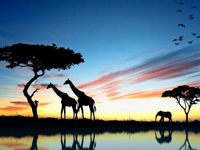 Интересные картинки для детей природа Африки (1)