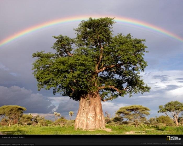 Интересные картинки для детей природа Африки (11)