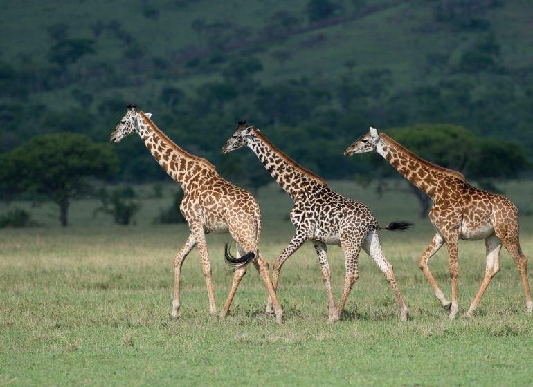 Интересные картинки для детей природа Африки (12)