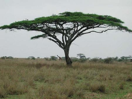 Интересные картинки для детей природа Африки (2)