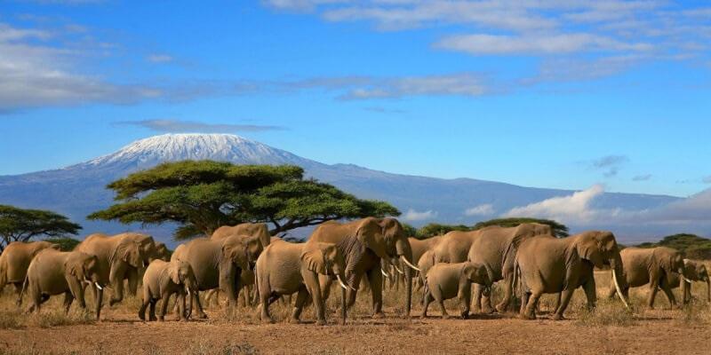 Интересные картинки для детей природа Африки (20)