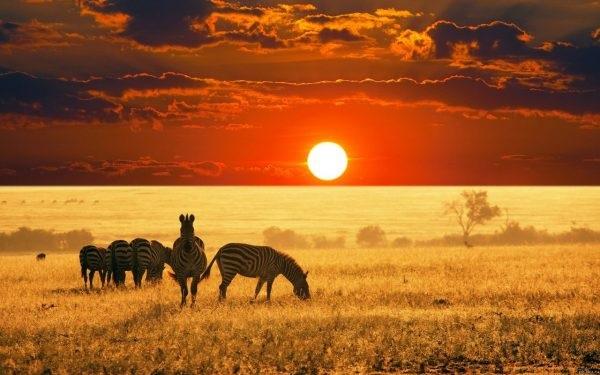 Интересные картинки для детей природа Африки (22)