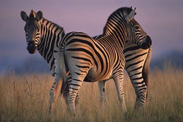 Интересные картинки для детей природа Африки (23)