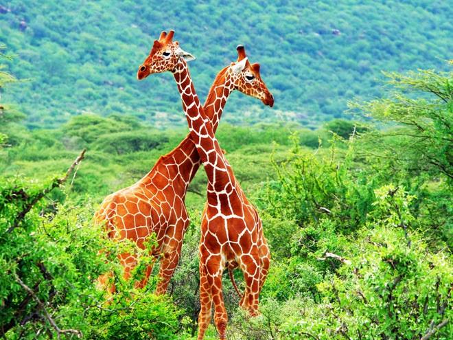 Интересные картинки для детей природа Африки (5)