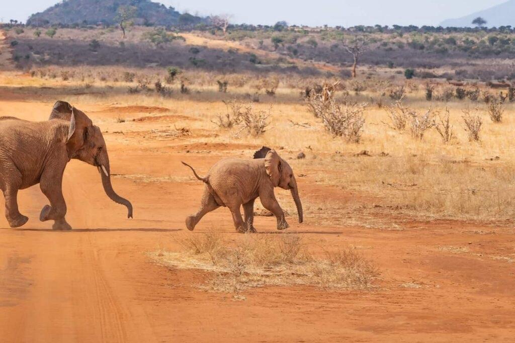Интересные картинки для детей природа Африки (6)