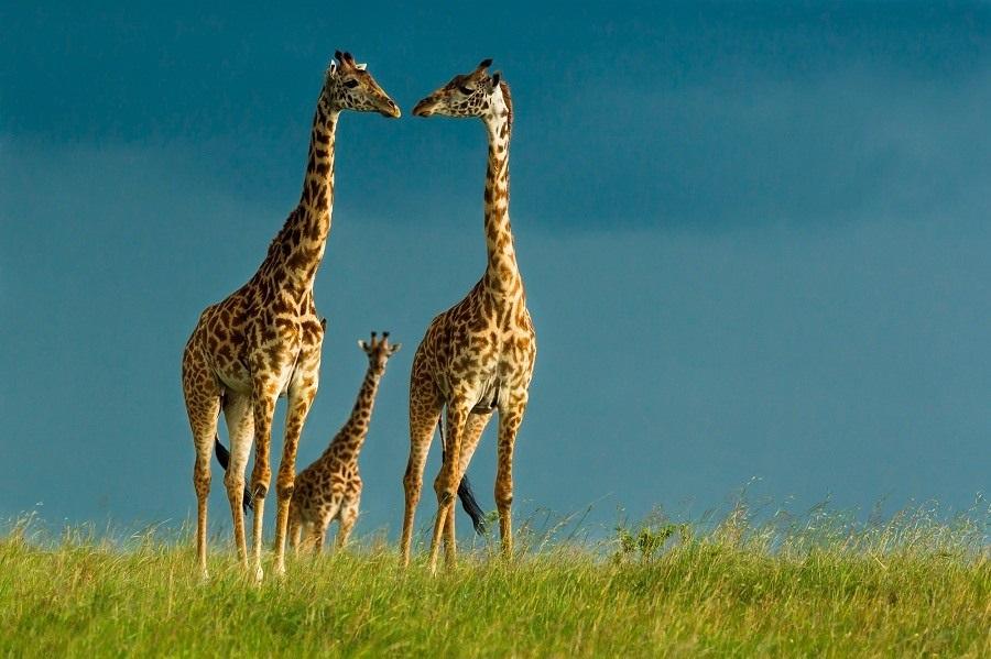 Интересные картинки для детей природа Африки (9)