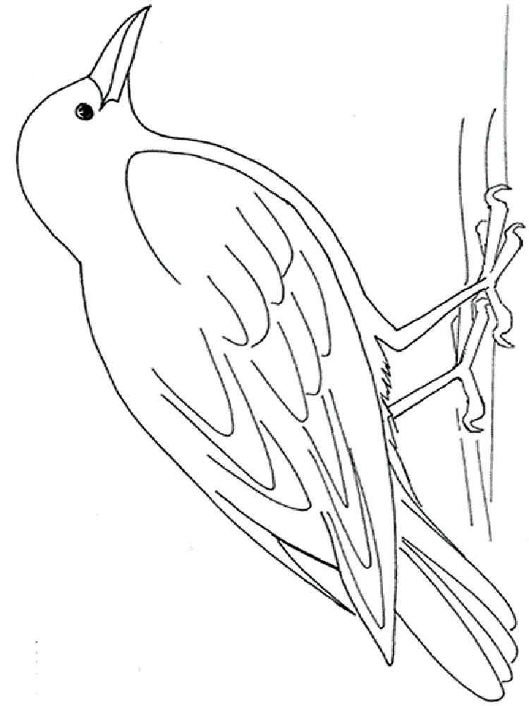 Картинки раскраска для детей Ворона (14)