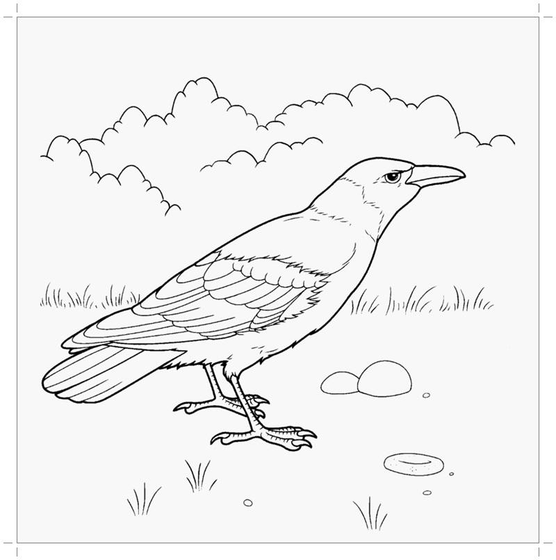 Картинки раскраска для детей Ворона (15)