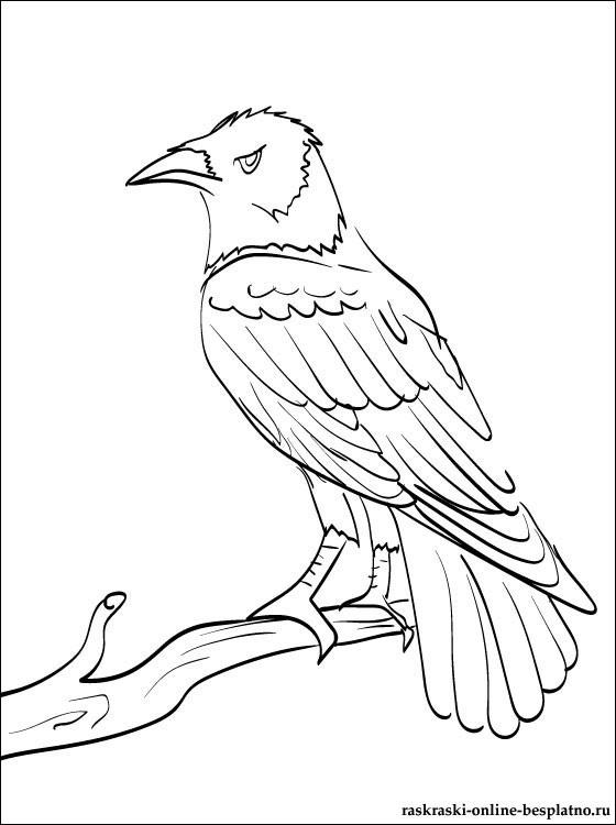 Картинки раскраска для детей Ворона (18)