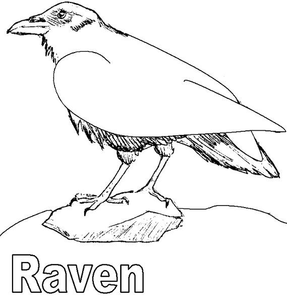 Картинки раскраска для детей Ворона (22)