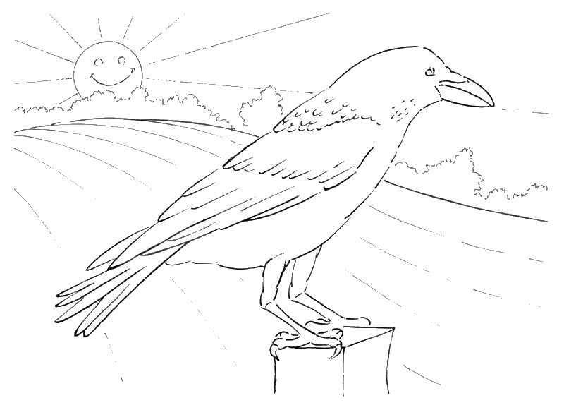Картинки раскраска для детей Ворона (23)