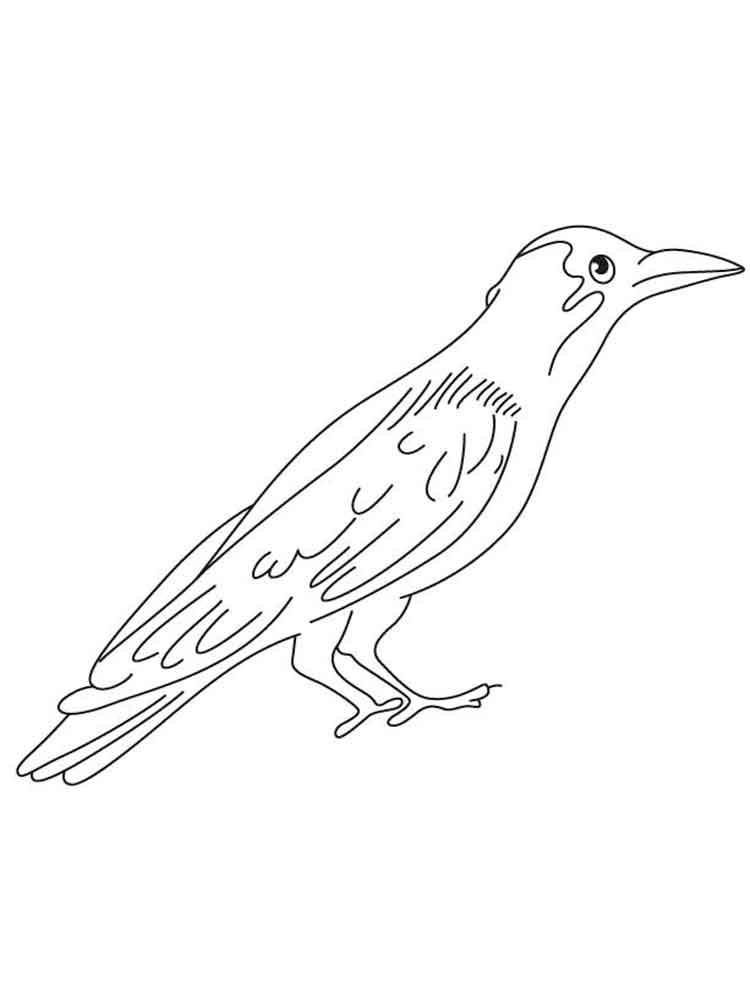 Картинки раскраска для детей Ворона (27)