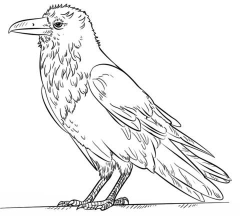 Картинки раскраска для детей Ворона (28)