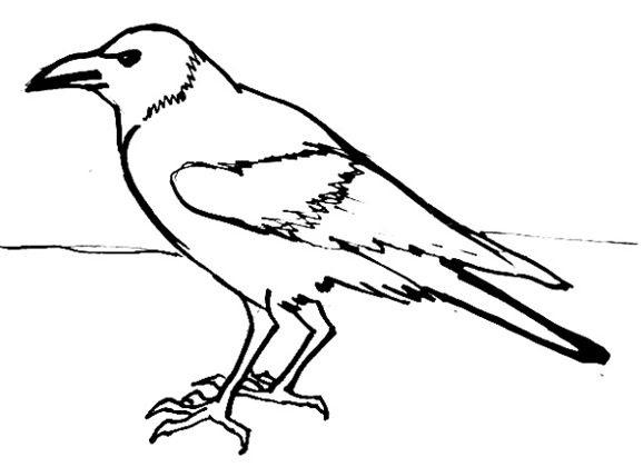 Картинки раскраска для детей Ворона (7)