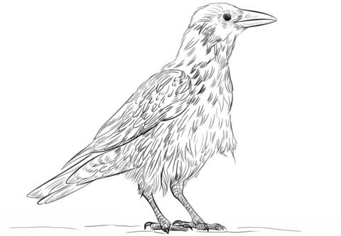 Картинки раскраска для детей Ворона (8)