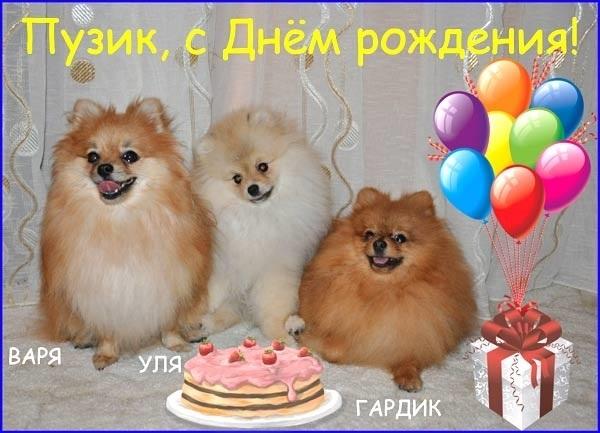 Картинки шпиц с днем рождения (7)