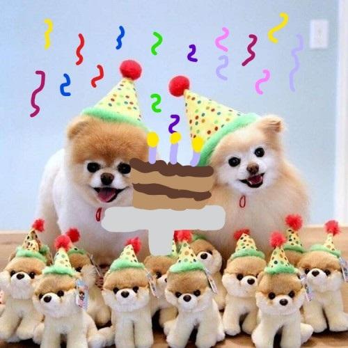 Картинки шпиц с днем рождения (9)
