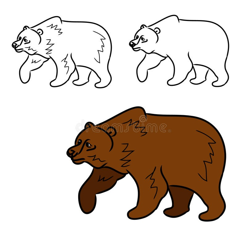 Медведь бурый картинка для детей (14)
