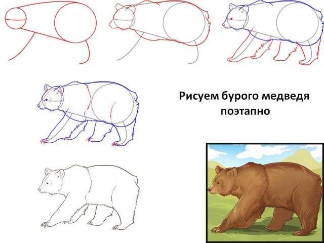 Медведь бурый картинка для детей (19)